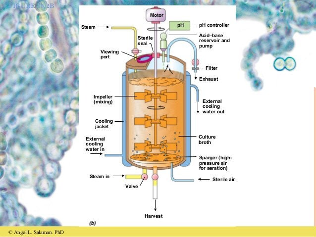 © Angel L. Salaman. PhD FIGURE 15.2B Steam Sterile seal Motor pH pH controller Acid–base reservoir and pump Viewing port F...