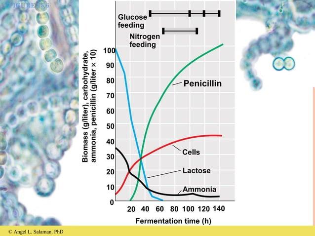 © Angel L. Salaman. PhD FIGURE 15.6 Glucose feeding Nitrogen feeding Cells Lactose Ammonia Penicillin Fermentation time (h...