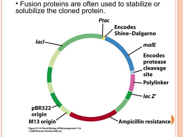 NEUPOGEN™ (AMGEN LTD)  Neupogen (filgrastim) is a form of a protein that stimulates the growth of white blood cells in yo...