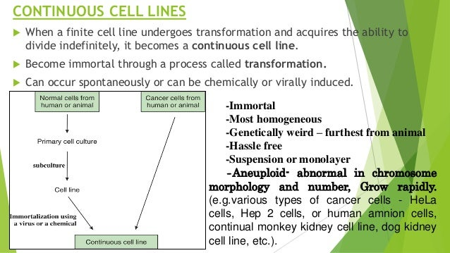 Types of Cell Lines