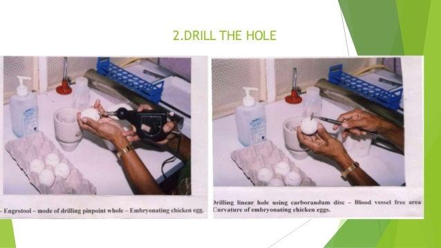 principles of virology flint pdf free