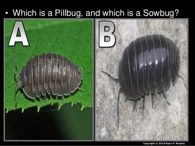 pill bug behaviors lab These behaviors can range from outright confrontation to a simple display of  animal behavior  vernier lab safety.
