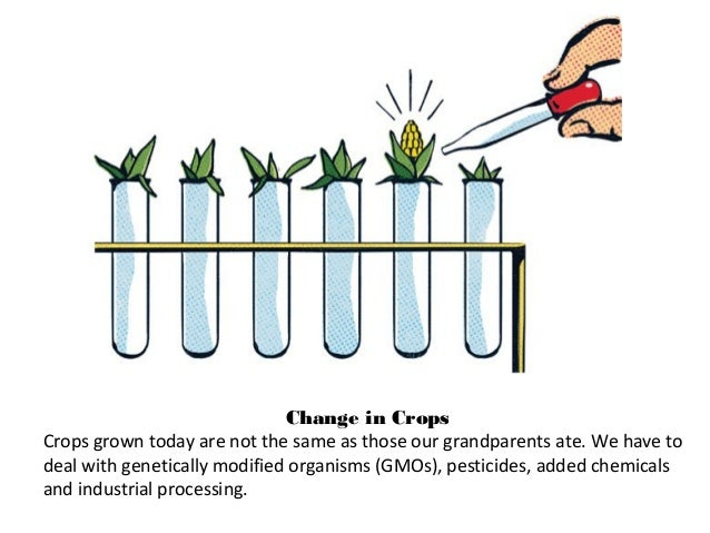 Change in Crops Crops grown today are not the same as those our grandparents ate. We have to deal with genetically modifie...