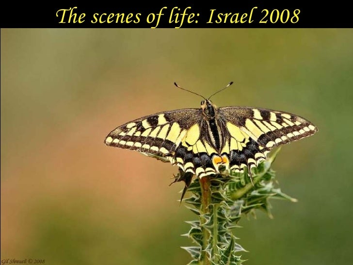 The scenes of life: Israel 2008