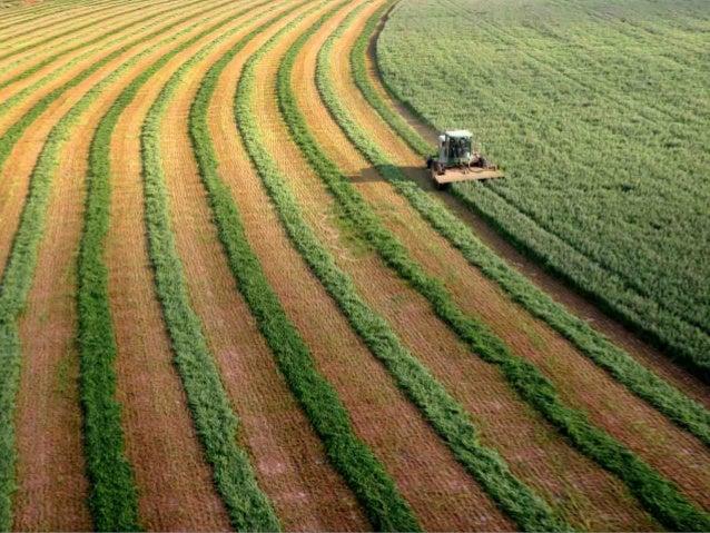 Israel agricultura   Fotos Slide 2