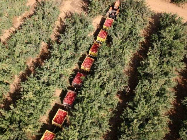 Israel agricultura   Fotos Slide 3