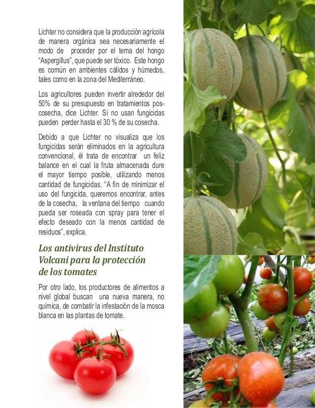 """""""Uno de los mercados más potenciales para los  tomates es China. El país, es un mercado en  surgimiento y es de manera sor..."""