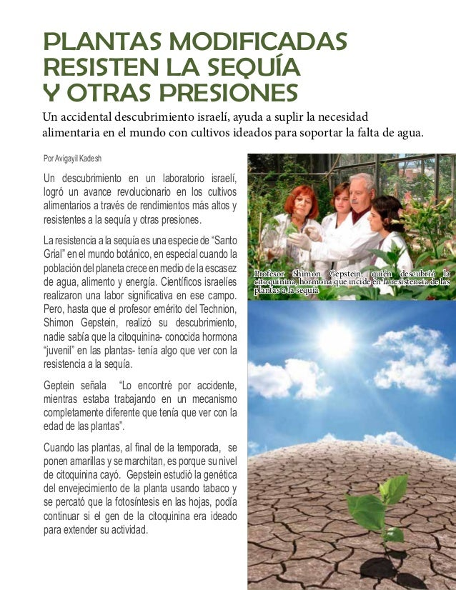 """""""Logramos extender la duración de la vida de  las plantas de tabaco (de cuatro a siete meses),  y el rendimiento fue más a..."""