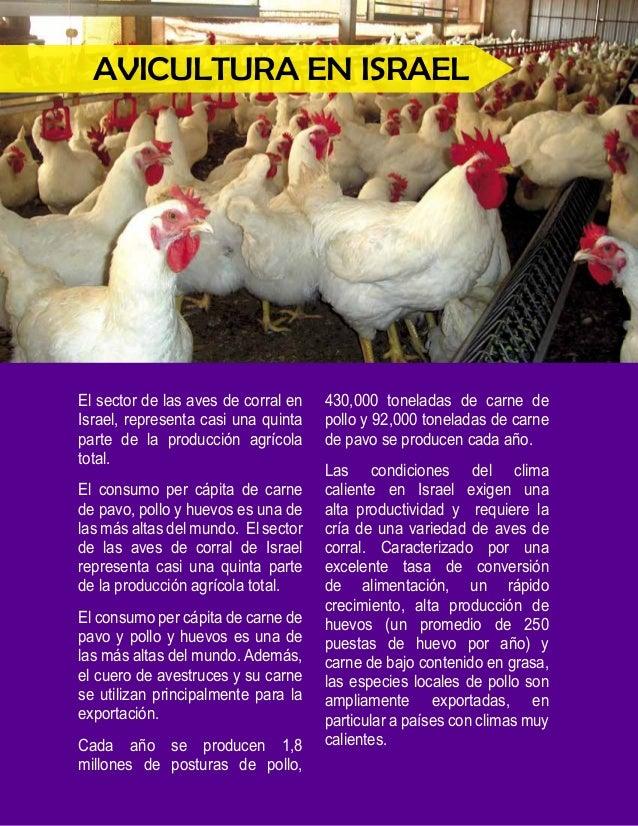 """""""La cría y reproducción de  los pollos de engorde es el  más destacado sector de la  industria avícola en Israel""""  La cría..."""