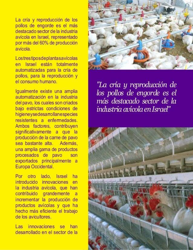 cría, equipo y sistemas de control.  Cría: Los tipos de pollos en  Israel, son altamente resistentes  a enfermedades y ada...