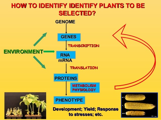 the contribution of genetics and the Darwin developed his theory of natural selection without any knowledge of genetics since darwin, genetics and evolution have been synthesized furthermore, natural selection is no longer considered to be the only evolutionary mechanism.