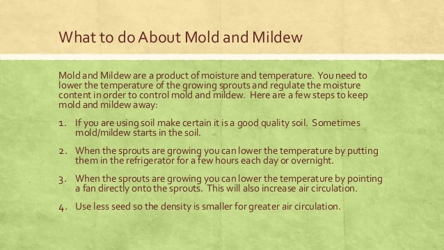 7  What to do About Mold and Mildew. Is that mold or mildew on my sprouts or is it white fuzzy cilia hairs