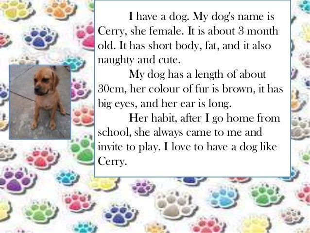 descriptive paragraph about dogs Compare/contrast essay- pet dog vs pet cat  but there are also some differences between the two dogs teach responsibility and cats are more independent.