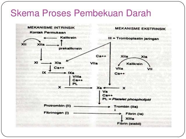 Pembekuan darah fosfolipid 20 skema proses pembekuan darah ccuart Images