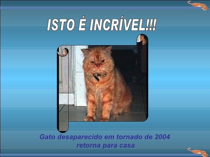 ISTO É INCRÍVEL!!! Gato desaparecido em tornado de 2004 retorna para casa