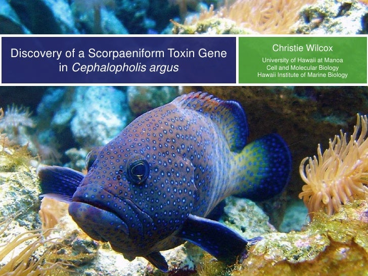 Christie WilcoxDiscovery of a Scorpaeniform Toxin Gene    University of Hawaii at Manoa        in Cephalopholis argus     ...