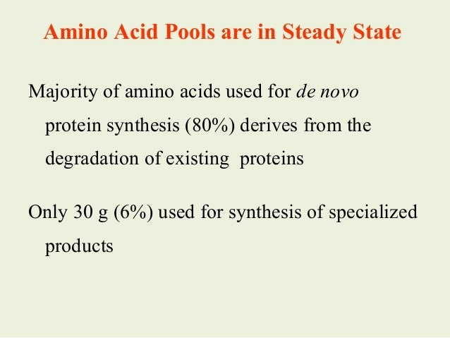 Hemoglobin Synthesis