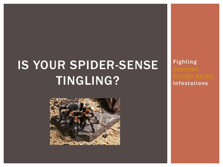 IS YOUR SPIDER-SENSE   Fighting                       Common                       Florida Spider      TINGLING?        In...