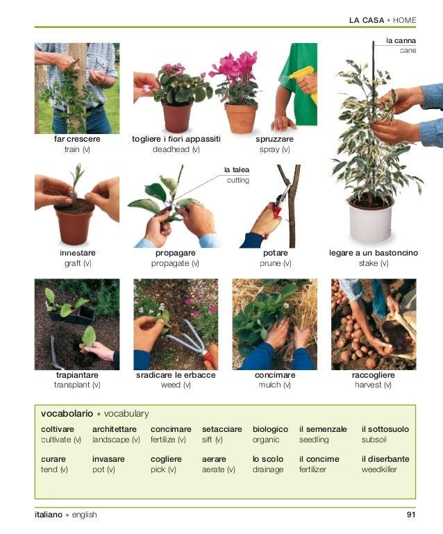 dk italian-english visual bilingual dictionary.pdf