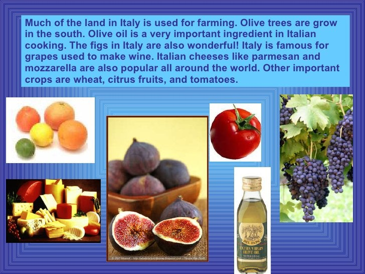Much of the land in Italy is used for farming. Olive trees are grow in the south. Olive oil is a very important ingredient...