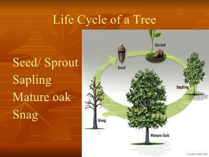 It Is Not Growing Like A Tree