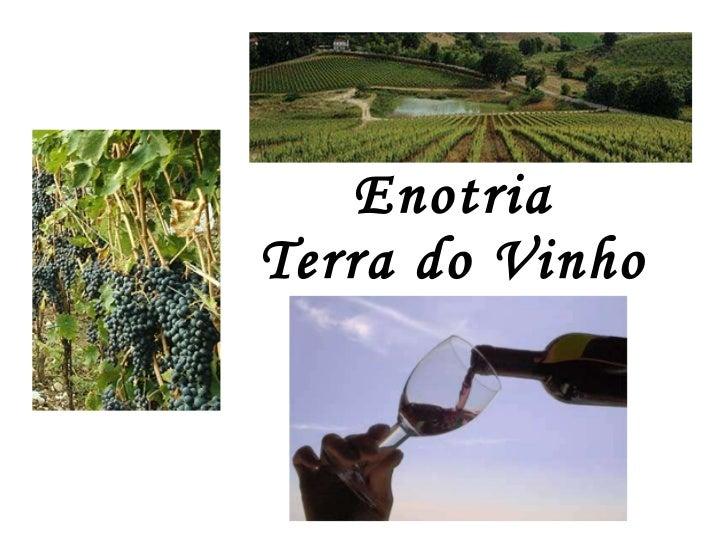 Enotria Terra do Vinho