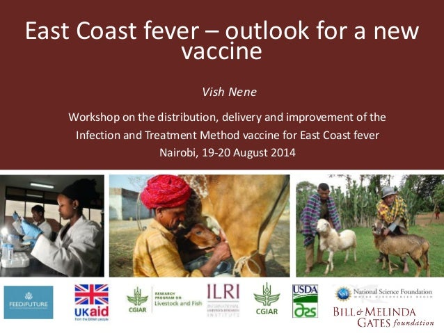 East Coast fever – outlook for a new  vaccine  Vish Nene  Workshop on the distribution, delivery and improvement of the  I...