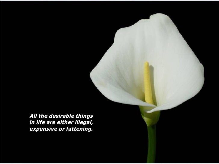 All the desirable things in life are either illegal, expensive or fattening.