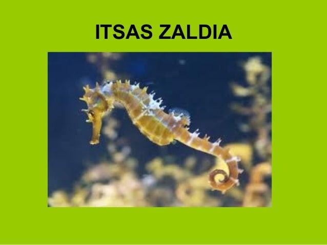 ITSAS ZALDIA