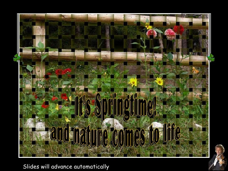 It's Springtime! and nature comes to life Slides will advance automatically It's Springtime! and nature comes to life