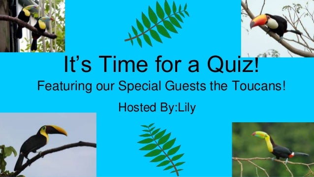 It's Time for a Quiz! Featuring our Special Guests the Toucans! Hosted By:Lily