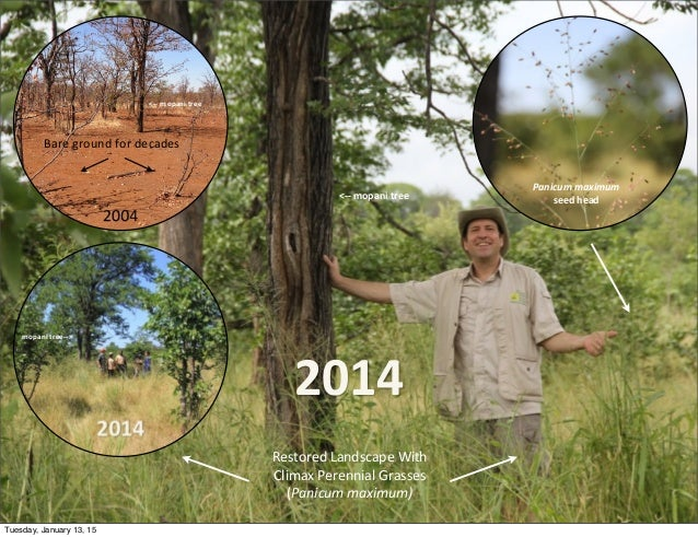 2014 <-‐-‐  mopani  tree <-‐-‐  mopani  tree mopani  tree-‐-‐> Restored  Landscape  With Climax  Per...