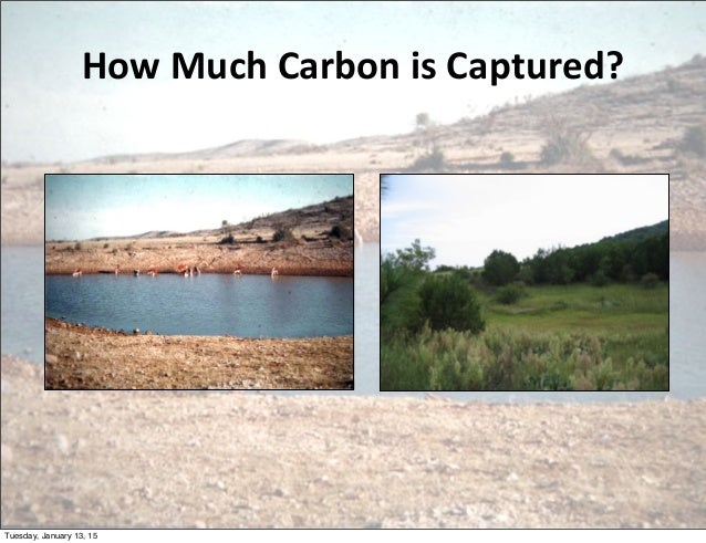 How  Much  Carbon  is  Captured? Tuesday, January 13, 15