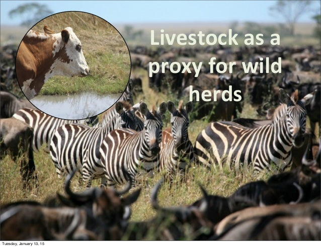 Livestock  as  a   proxy  for  wild   herds Tuesday, January 13, 15