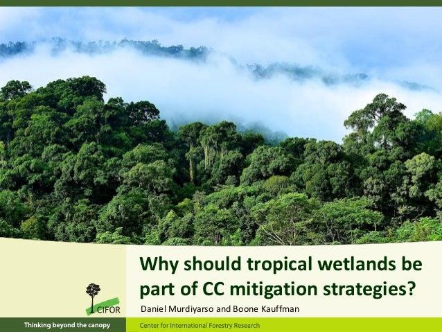 Why should tropical wetlands bepart of CC mitigation strategies?Daniel Murdiyarso and Boone Kauffman