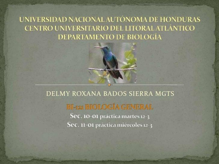 DELMY ROXANA BADOS SIERRA MGTS<br />UNIVERSIDAD NACIONAL AUTÓNOMA DE HONDURASCENTRO UNIVERSITARIO DEL LITORAL ATLÁNTICODEP...