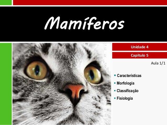 Mamíferos Unidade 4 Capítulo 5 Aula 1/1   Características  Morfologia  Classificação  Fisiologia