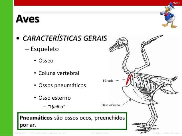 Iv 4 aves for O osso esterno e dividido em