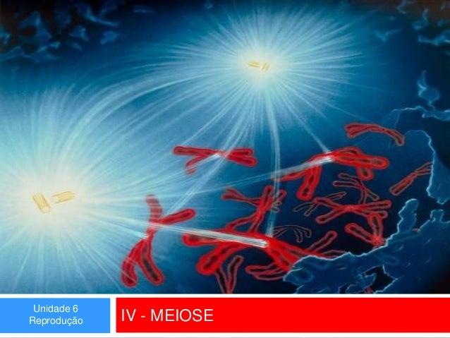 Unidade 6 Reprodução  IV - MEIOSE