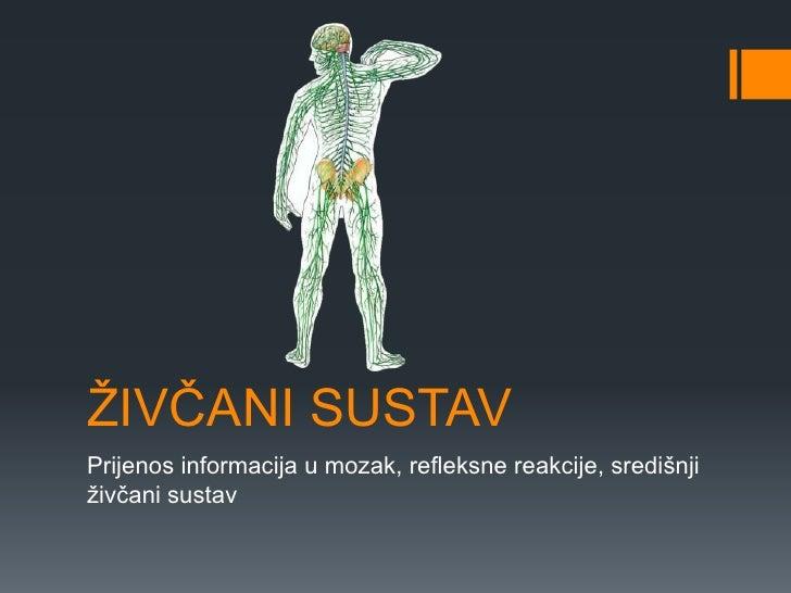 ŽIVČANI SUSTAVPrijenos informacija u mozak, refleksne reakcije, središnjiživčani sustav