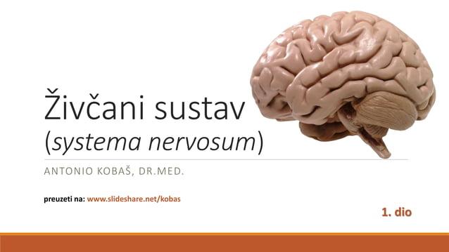 Živčani sustav (systema nervosum) ANTONIO KOBAŠ, DR.MED. preuzeti na: www.slideshare.net/kobas