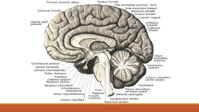 Homunculus (čovječuljak)