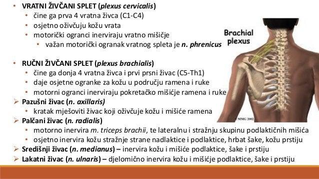 Živčani sustav