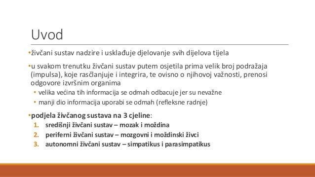 Živčani sustav Slide 2