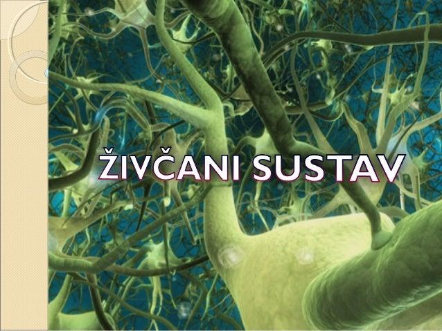Živčani sustav je mreža specijaliziranih stanica koje šalju, prenose ili primaju informacije vezane za organizam i njegov...
