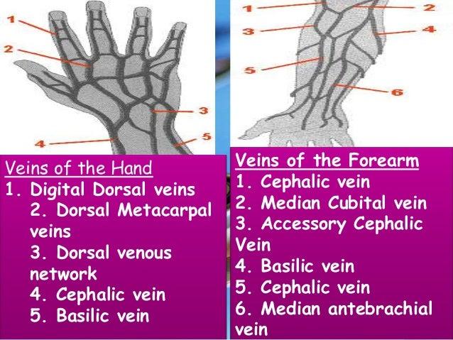 iv cannula insertion, Cephalic Vein