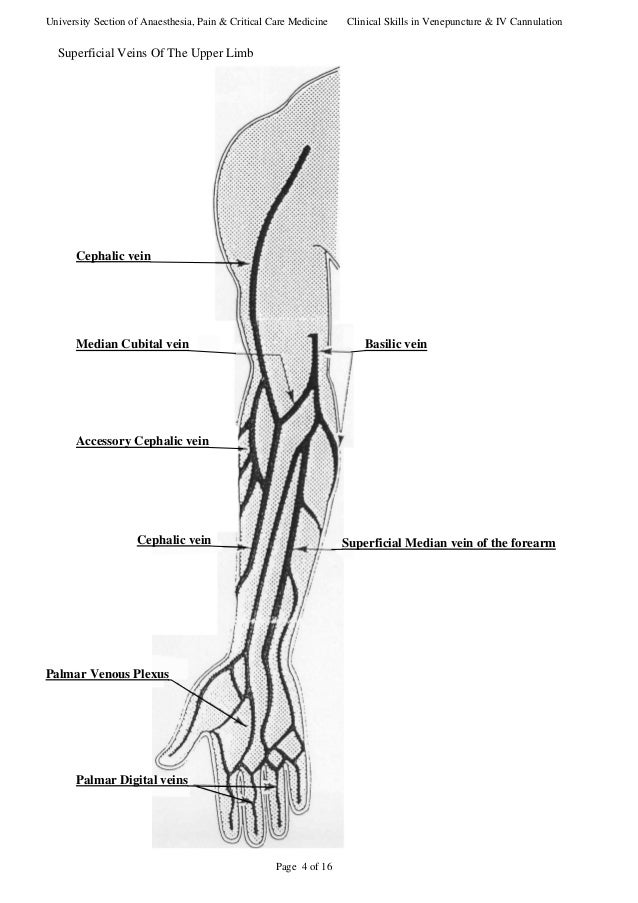 iv cannulation sites, Cephalic vein