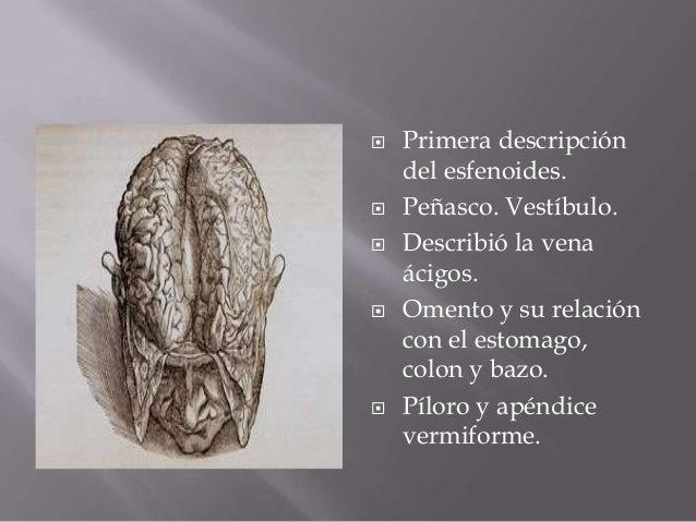 Los síntomas y los indicios por la várice varicosa