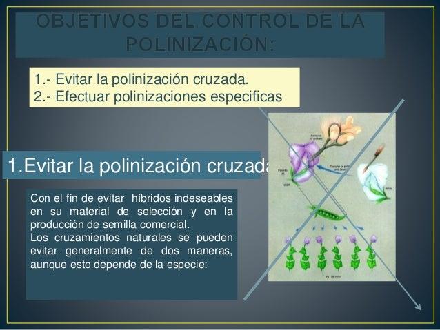 I vcontrol de la polinizacion copia for Incompatibilidad en plantas