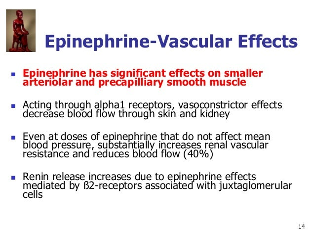 14 Epinephrine-Vascular Effects  Epinephrine has significant effects on smaller arteriolar and precapilliary smooth muscl...